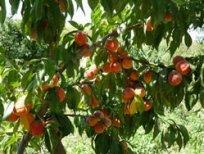armeniya-fruktovyj-raj-zemli-drevnejshej